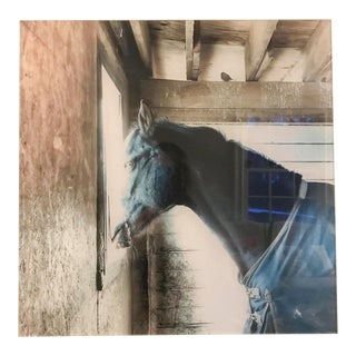 Acrylic Mounted Black Horse Photograph