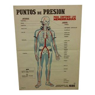 """Vintage """"Puntos De Presion"""" Anatomy Print"""