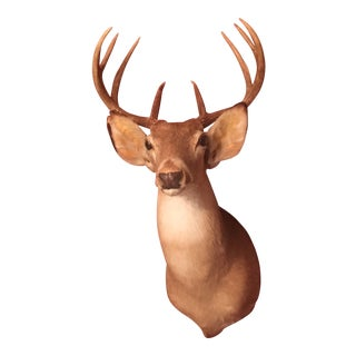 Texas Eight Point Whitetail Deer Mount