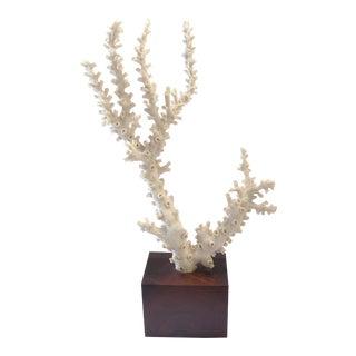 White Natural Coral Branch Specimen Displayed on Wood