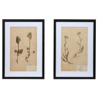 Framed Herbarium I - A Pair
