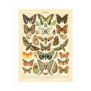 Vintage Papillons Archival Print