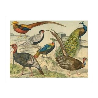 Vintage Peacock & Friends Archival Print