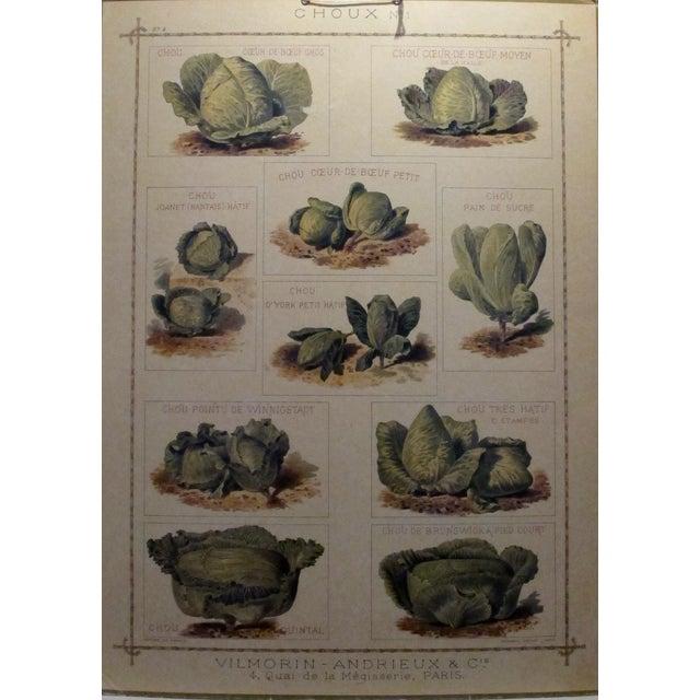 Image of 1900 Original French Vintage Vegetable Chart