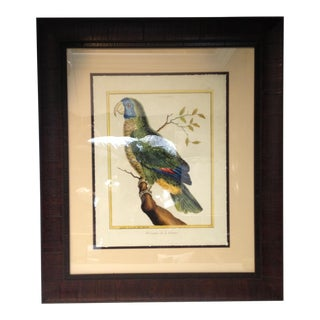 Parrot Print in Wood Frame