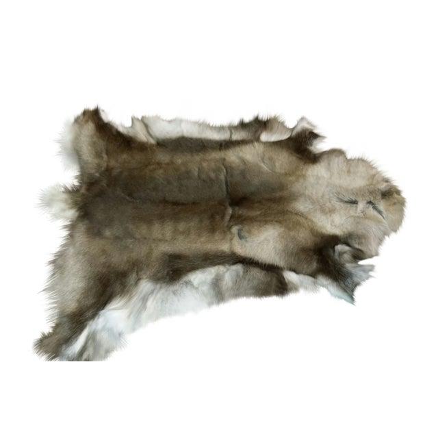 """Reindeer Hide Rug Dark - 3'7""""x4' - Image 1 of 2"""