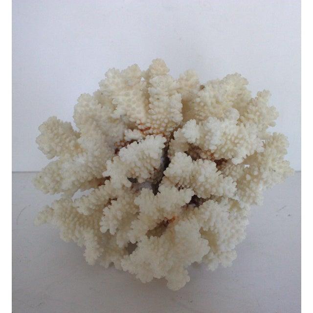 Natural Coral Specimen - Image 2 of 3