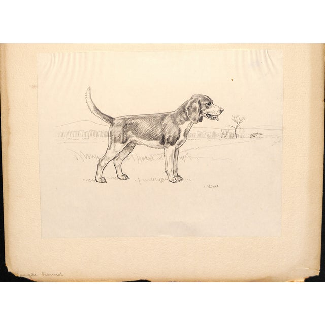 Beagle, Pencil Drawing by Charles Liedl - Image 2 of 3