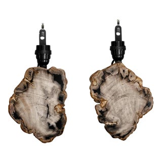 Petrified and Polished Wood Sconces - A Pair