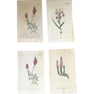 19th-Century Botanical Prints - Set of 4