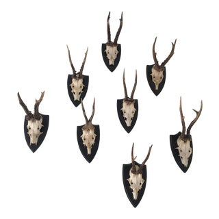European German Black Forest Roe Deer Antler Mounts - Collection of 8