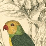 Image of Vintage Parakeets Archival Print