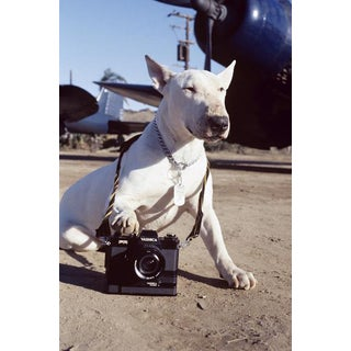 "Bud Gray ""A Dog & His Camera"" Photograph"