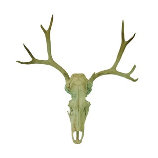 Weathered Bull Skull With Deer Antlers