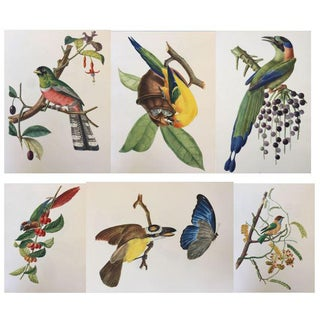 Rare 1st Edition - 34 Full Color Lithographs of Tropical American Birds