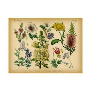 Antique 'Garden Botanical' Archival Print