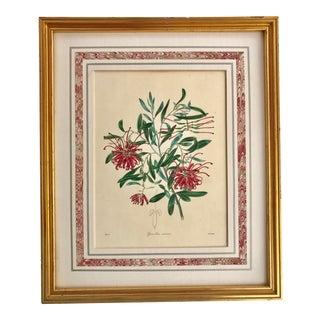 Antique Floral Botanical Etching