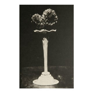 Henry Fox Talbot 1840 Dahlias Heliogravure Photo