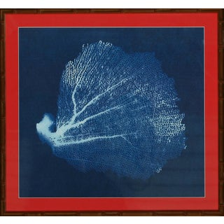 Framed Blue Coral Fan