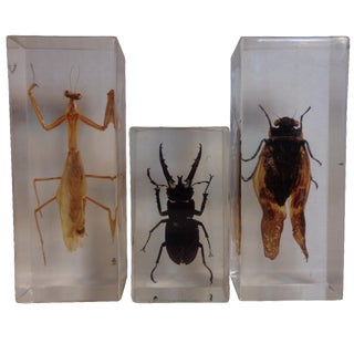 Insect Specimens in Lucite- Set of 3
