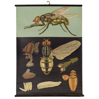 German Educational Poster of a Fly