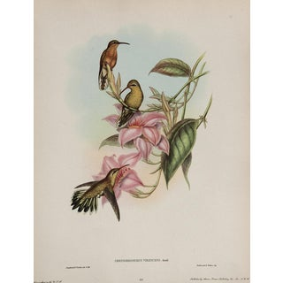 Hummingbird Lithograph by John Gould