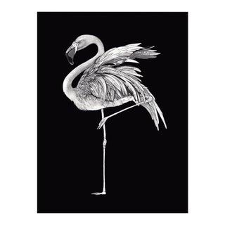 Premium giclee print of flamingo