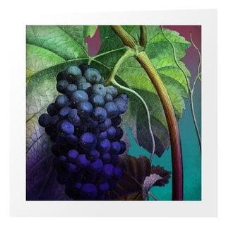 Vintage Purple Grapes Archival Print