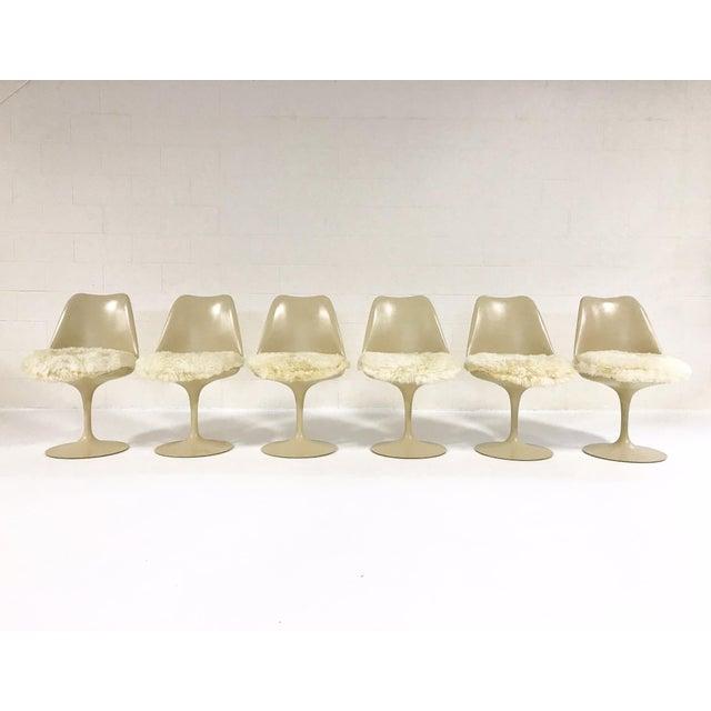 Eero Saarinen Tulip Chairs with Custom Brazilian Sheepskin Cushions - Set of 6 - Image 2 of 9