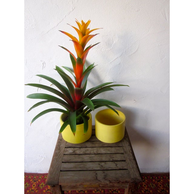 Yellow Gainey Mid Century Modern Pots - Pair of 2 - Image 9 of 9
