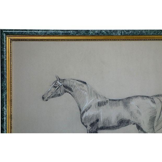 Image of Patricia Mauser Horse Charcoal Drawing