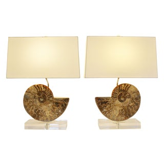 Ammonite Fossil Lamps - A Pair