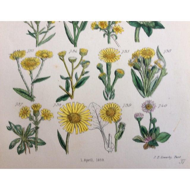Botanical Prints C-1859 - A Pair - Image 7 of 9