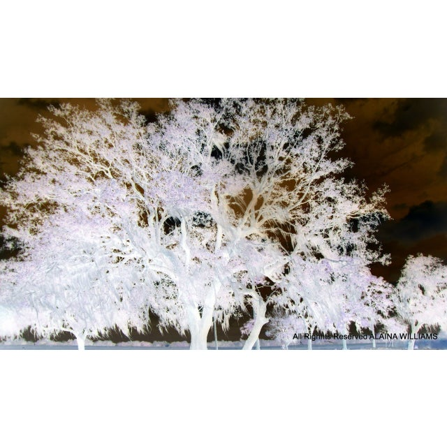 Image of Limited Edition Wise Oak Tree II Photograph