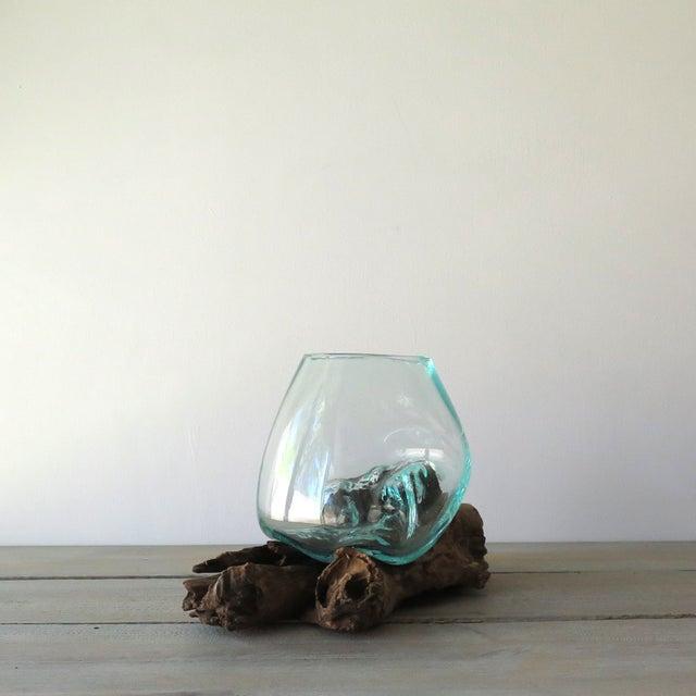 Glass on Teak Driftwood Terrarium - Image 4 of 7