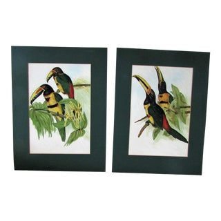 Original Toucan Paintings on Board- A Pair
