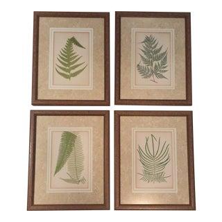 Vintage Original Fern Prints - Set of 4