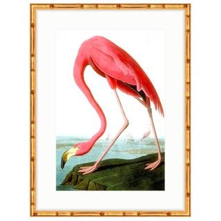 Soicher Marin Audubon Flamingo Print in Gold Bamboo Frame