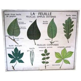 Vintage French Leaf & Stem Botanical Chart
