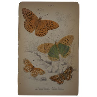 19th C. Hand Colored Butterflies Engraving
