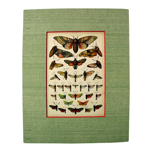 Antique Moth Lithograph - Image 1 of 3