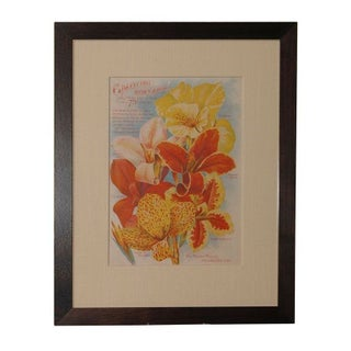 Vintage Lily Art Print