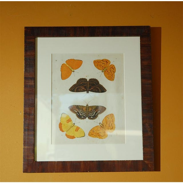 Antique Butterfly Prints Set of Eight - Image 6 of 10