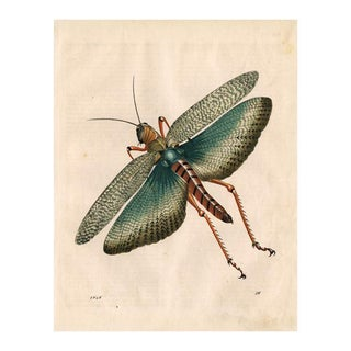 Antique 'Grasshopper' Archival Print