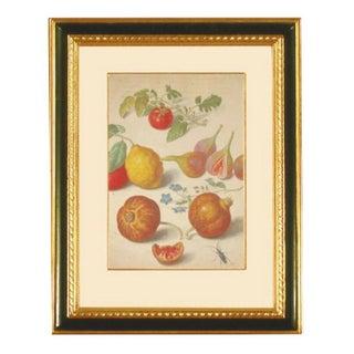 Quintessa Art Reproduction Walther Botanical Print
