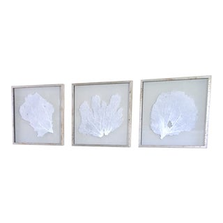 Karen Robertson Silver Framed Sea Fans ~ Coastal Wall Art Decor From Bliss Home and Design - Set of 3