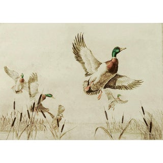 Mallards by Sandy Scott Etching