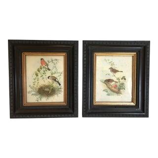 English Bird Prints - A Pair