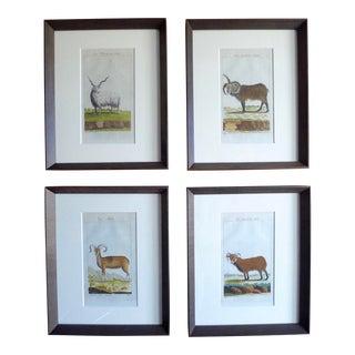Antique 18th C. Animal Buffon Prints - Set of 4