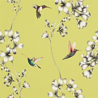 Harlequin Amazilia in Gooseberry Wallpaper